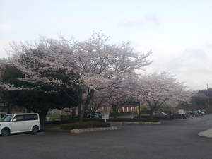 20150331_171856.jpg